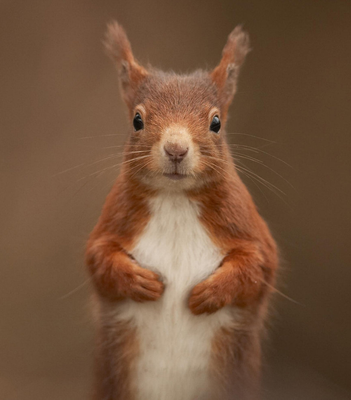 The outlook for the red squirrel here is said to be. Photo: PA Wire