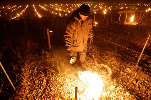 A wine grower lights heaters early in the morning, to protect vineyards from frost damage outside Chablis, France, April 7, 2021. REUTERS/Pascal Rossignol