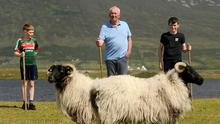 Achill Sheep farmer Martin Calvey getting help from two of his grandsons Jack Dempsey and Cian Kilbane Keel Achill, Co Mayo. Photo Conor McKeown
