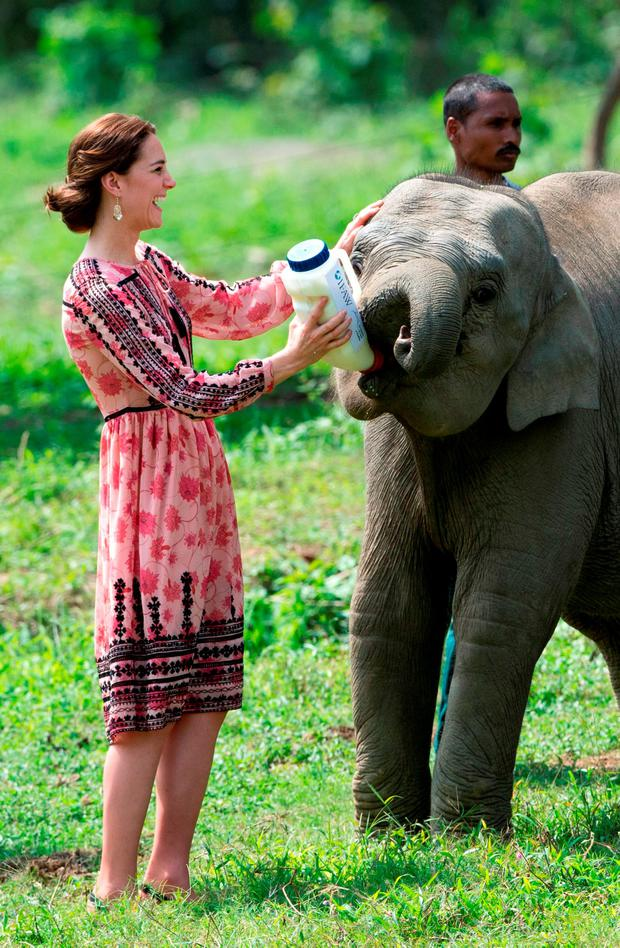 Catherine, Duchess of Cambridge feeds a baby elephant during a visit to the Centre for Wildlife Rehabilitation and Conservation, at Kaziranga National Park on April 13, 2016 in Guwahati, India. The Duke and Duchess of Cambridge are on a week-long tour of India and Bhutan taking in Mumbai, Delhi, Assam, Bhutan and Agra. (Photo by Arthur Edwards - Pool/Getty Images)