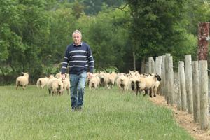 In addition to his pedigree Charolais herd, he also keeps a flock of 240 spring lambing ewes. Photo: Finbarr O'Rourke