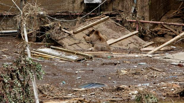 The body of a bear lies at a flooded zoo area in Tbilisi, Georgia, Sunday, June 14, 2015. Tigers, lions, a hippopotamus and other animals have escaped from the zoo in Georgias capital after heavy flooding destroyed their enclosures, prompting authorities to warn residents in Tbilisi to say inside Sunday. (AP Photo/Shakh Aivazov)