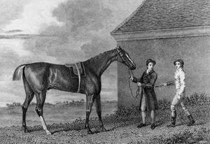 Eclipse finished his career unbeaten, and rarely extended, in 18 races. By the end he was running at odds of 1/70 despite carrying a weight of 12 stone'