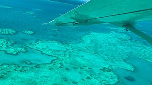 An aerial survey of coral bleaching on the Great Barrier Reef. Photo: JAMES COOK UNIVERSITY AUSTRALIA/AFP via Getty Images