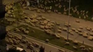 Sheep venturing down the empty street (@munsifmey/AP)