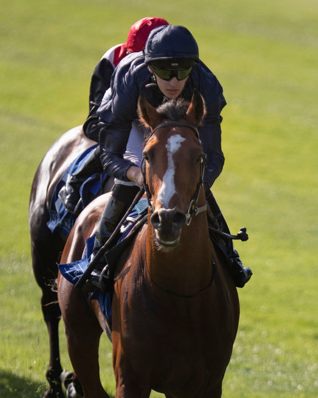 Star name: Aidan O'Brien's Armory