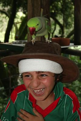 Even the birds in far north Queensland are sporting the red and green with Conor Puri, Cairns, Far north Queensland, Australia.