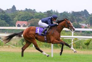 GODLY POWERS: Goddess and Ryan Moore are tipped for Leopardstown. Pic: Alain Barr.