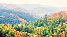 Continuous cover forestry means the forest consists of trees of all ages and makes use of natural forest processes.