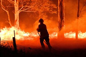 A firefighter hoses down trees and flying embers in a bid to save house in Nowra, New South Wales.  Photo: Getty Images