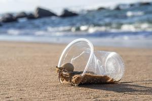 Hermit crabs are a vital part of the marine ecosystem