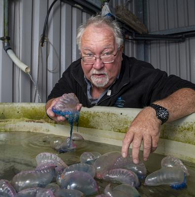 Danger: Kevin Flannery with Portuguese man-of-war jellyfish, washed up on the coast. Photo: Domnick Walsh