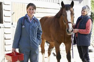 Horse owners and vets have been cautioned. Photo: Getty Images.