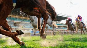 'Thistle Bloodstock Ltd sent the racehorse, The Tartan Spartan, to be euthanised 12 months ago, believing the animal was broken down beyond repair, the High Court has been told' (stock photo)