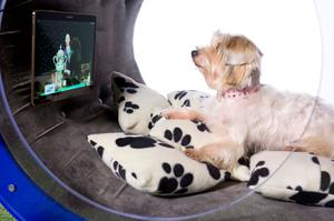 EDITORIAL USE ONLY Gracie, a terrier cross, watches television in the Samsung Dream Doghouse created by the tech firm to celebrate their sponsorship of Crufts 2015 ? which starts on Thursday 5th March at The NEC Birmingham. PRESS ASSOCIATION Photo. Issue date: Wednesday March 4, 2015. The architect designed dog kennel, which features a Samsung Tab S entertainment wall, astro turfed treadmill and paw operated snack dispenser, took 12 designers over six weeks to create in the aim to represent the ultimate in luxury canine living. The Samsung Dream Doghouse will be on display at Crufts, which Samsung has been sponsoring for over 20 years. Photo credit should: David Parry/PA Wire