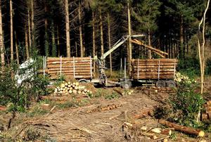 Master Class: It is hoped the ITGA new timber sales dispatch system will encourage more thinning of plantations