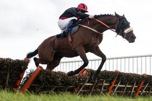 Peregrine Run looks set to deliver this evening in Killarney. Photo: Patrick McCann/Racing Post