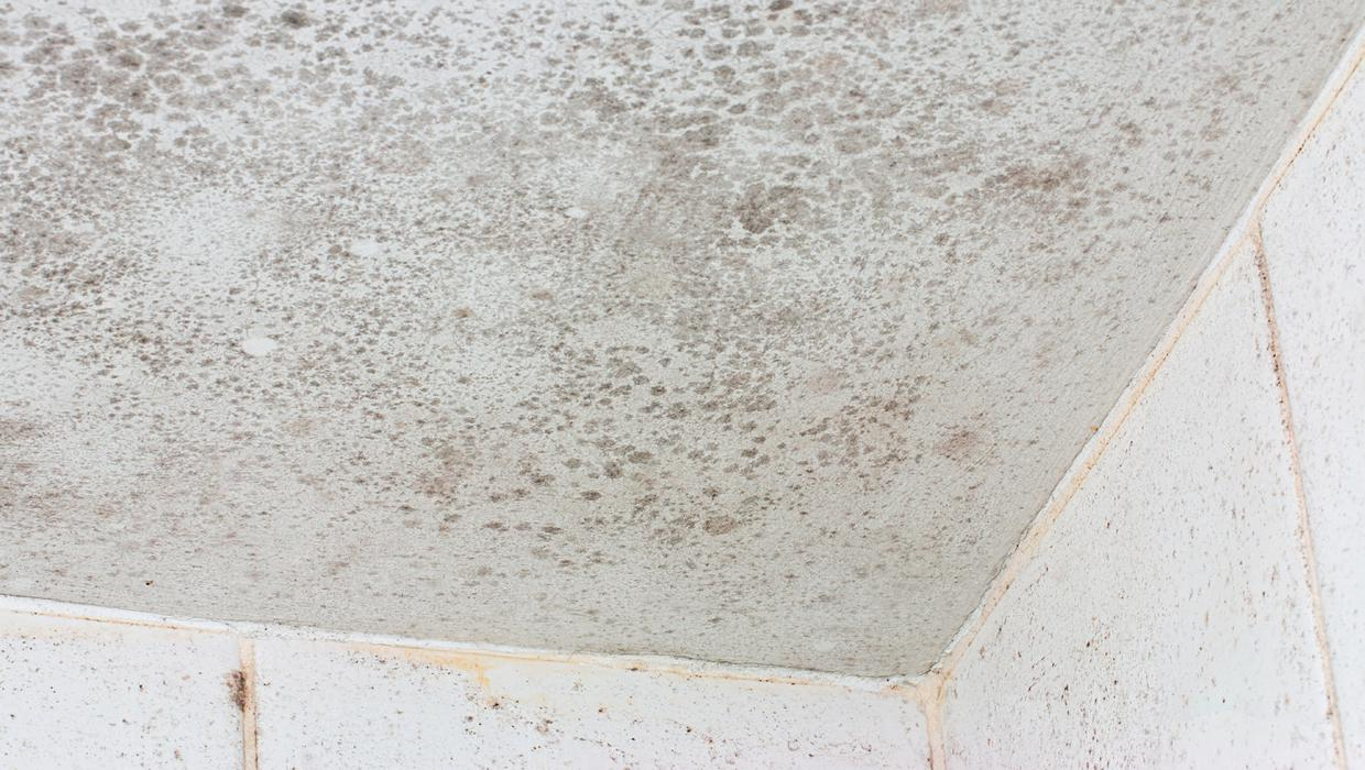 How To Get Rid Of Mould From Your Ensuite Ceiling Independent Ie
