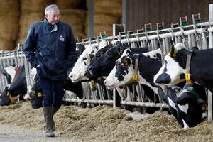 Farmer and breeder Jean-Claude Pette poses next to his cows in his farm at Lizines, France, February 12, 2020. Picture taken February 12, 2020. REUTERS/Charles Platiau