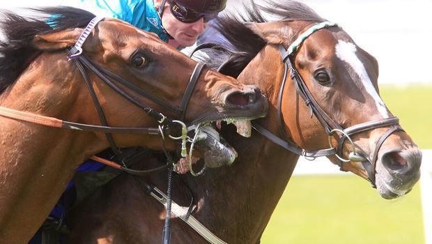 Runner-up Parish Hall (L) appears to try to take a bit out of eventual winner Postulation (Pat Smullen) in the Silver Stakes at the Curragh