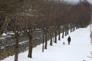 A woman man walks her dog along the banks of the Royal Canal in Drumcondra, Dublin as the severe weather conditions continue Brian Lawless/PA Wire