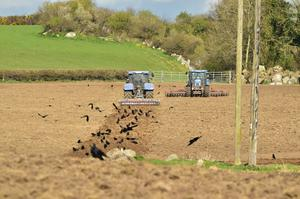 The Smith Agri team getting 50 acres ready for sowing  seed oats at Donore, Bagenalstown, Co Carlow last week. Photo: Roger Jones