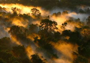 """Existing undisturbed tropical forests are a crucial global carbon store or """"sink"""", which slow the impacts of emissions by removing carbon dioxide from the air and storing it in trees. Photo: PA"""