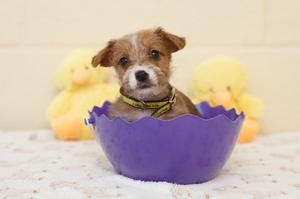 """The Easter weekend can be a """"recipe for disaster"""" if dogs get their paws on chocolate eggs. Photo: Dogs trust"""