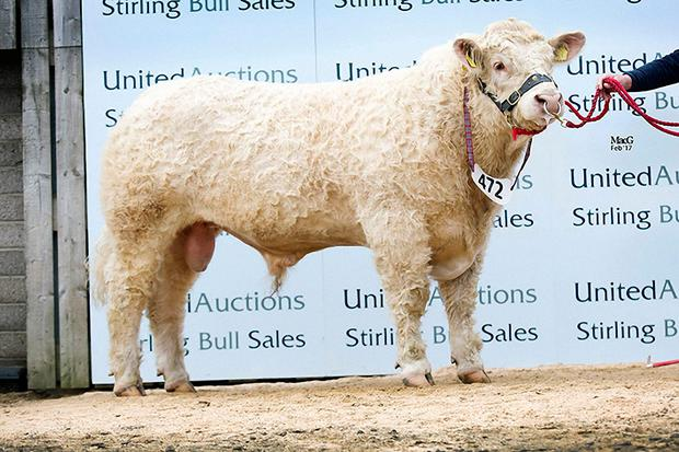 Woodpark Longbow sired by the Irish bred, Deeside Gulliver sold for the third top price of 16,000 gns at the sales in Scotland.
