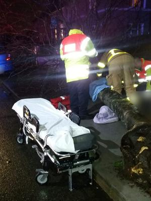 Firefighters treat a patient hit by a falling tree in Crumlin