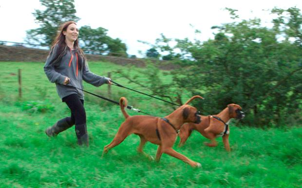 Laura Jacques with Shadow and Chance - who were created via a cloning process from her boxer Dylan. Credit: ITV/Real Stories with Ranvir Singh/PA Wire