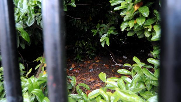 General view of area behind fence at St. Stephen's Green, Dublin. Picture: Caroline Quinn