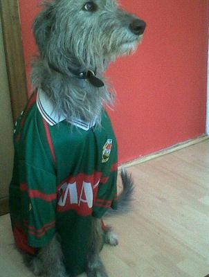 Martin sent us this picture of his dog supporting Mayo