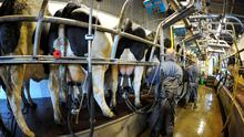 Price reductions could cost dairy farmers €65m by mid-summer