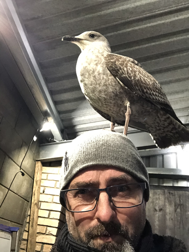 Winging it: Donal had to call in experts for advice when the gull, which he believes had been hit by a car near his home, refused to get off his head