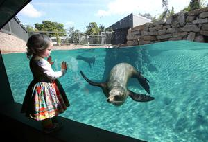 Ellen Rooney (2) from Sandycove looks at the sea lions in their new habitat in Dublin Zoo yesterday.