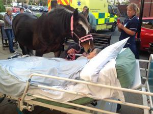 Sheila Marsh, 77, in her hospital bed being gently nuzzled by her horse, Bronwen