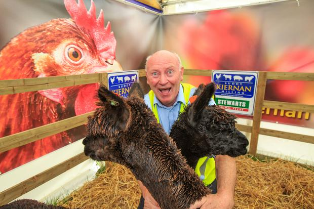James Francis McInerney from Cavan with Alpacas as preperations get under way for the 2019 Ploughing Championships in Co Carlow. Picture: Mark Condren