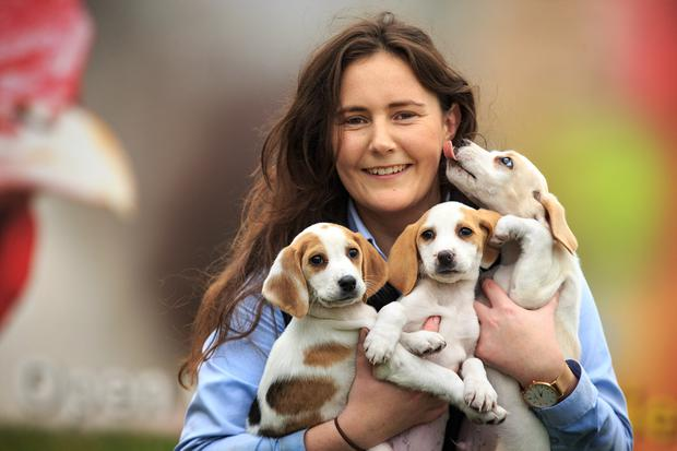 Sunny start: Susan Dudley holds three puppies as preparations got under way for the 2019 Ploughing in Co Carlow yesterday. Photo: Mark Condren