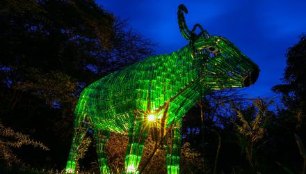 Nyati the Buffalo statue, made from recycled Tusker glass bottles, in Kenya joins Tourism Ireland's Global Greening initiative