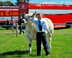 Eight year-old Ben Pearson from Ballacolla Co Laios with his Belgium Blue bull calf that was a class winner at Dualla show in Tipperary at the weekend
