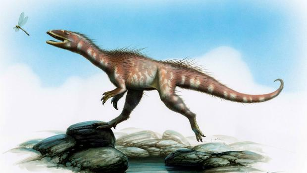 "Handout artist's impression issued by the National Museum of Wales of a new dinosaur species discovered in Wales that dates back 200 million years to the earliest Jurassic period, according to scientists. PRESS ASSOCIATION Photo. Issue date: Tuesday June 9, 2015. The fossilised skeleton of the dog-sized creature, a theropod dinosaur, is described as a cousin of the giant tyrannosaurus rex and is believed to be the earliest specimen of a Jurassic era dinosaur ever to walk the Earth. Described as the ""find of a life-time"" it was discovered on Lavernock beach near Penarth in the Vale of Glamorgan by two fossil-hunting brothers, Nick and Rob Hanigan after storms in spring 2014. See PA story SCIENCE Dinosaur. Photo credit should read: Bob Nicholls/National Museum of Wales/PA Wire  NOTE TO EDITORS: This handout photo may only be used in for editorial reporting purposes for the contemporaneous illustration of events, things or the people in the image or facts mentioned in the caption. Reuse of the picture may require further permission from the copyright holder."