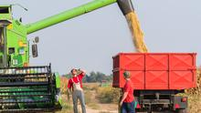 Young Farmers examine soya bean in trailer after harvest