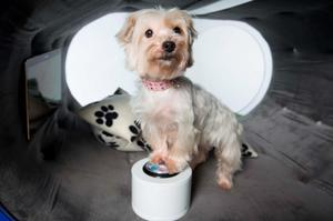 Gracie, a terrier cross, watches television in the Samsung Dream Doghouse created by the tech firm to celebrate their sponsorship of Crufts 2015  Photo: David Parry/PA Wire
