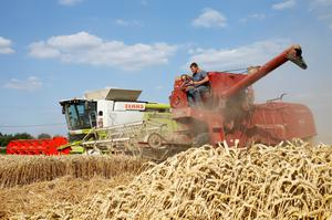 Arnaud Caron, a French farmer drives an old Mc Cormick F8-413 combine, next to modern Claas 660 Lexion combine, as he harvests his last field of wheat, in Vauvillers, northern France. REUTERS/Pascal Rossignol