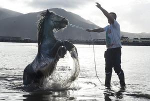 """Trevor Lawlor from Tralee takes his horse  """" Apache """" for a swim in Fenit Co Kerry as the Sun shined down on Kerry ."""