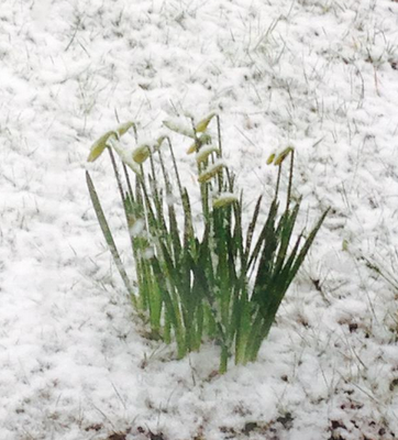Photo: @marnicol/ Twitter. Tweet your weather photos to us with #IndoSubmit or email contact@independent.ie.