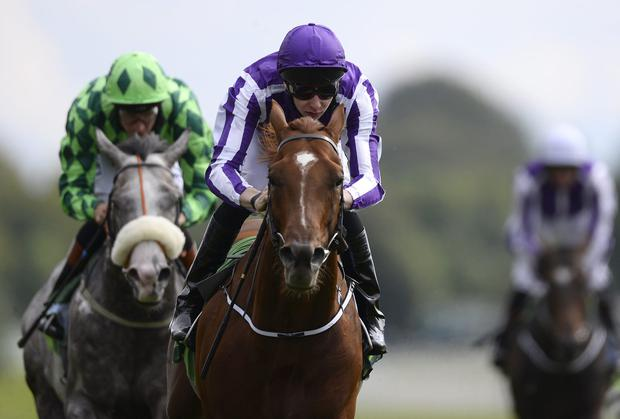 Joseph O'Brien drives Australia on to win the Juddmonte International Stakes at York. Photo: Alan Crowhurst/Getty Images