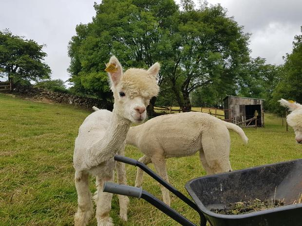 Located in Oughterard in Galway overlooking Lough Corrib, the family are hoping to open a 'glamping' facility on the idyllic farm in the near future Photo: Curraghduff Farm