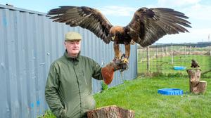 John Nugent has been reunited with his missing eagle, Kalin